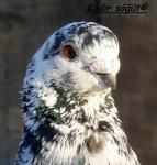 kuş01