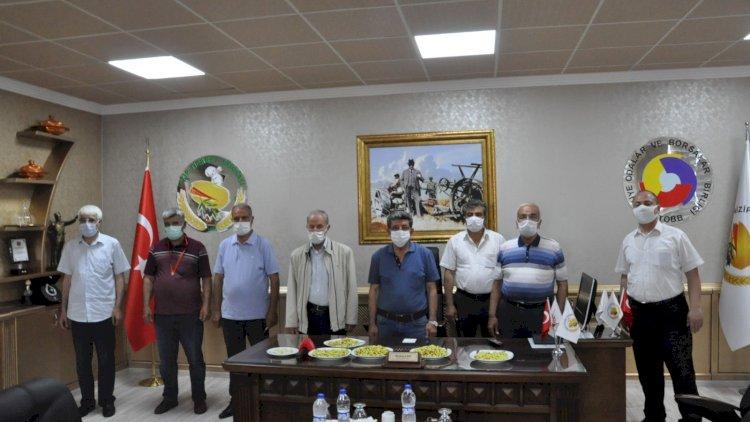 Nizip'te Ilk Mahsul Boz Fistiği Altinla ödüllendir...